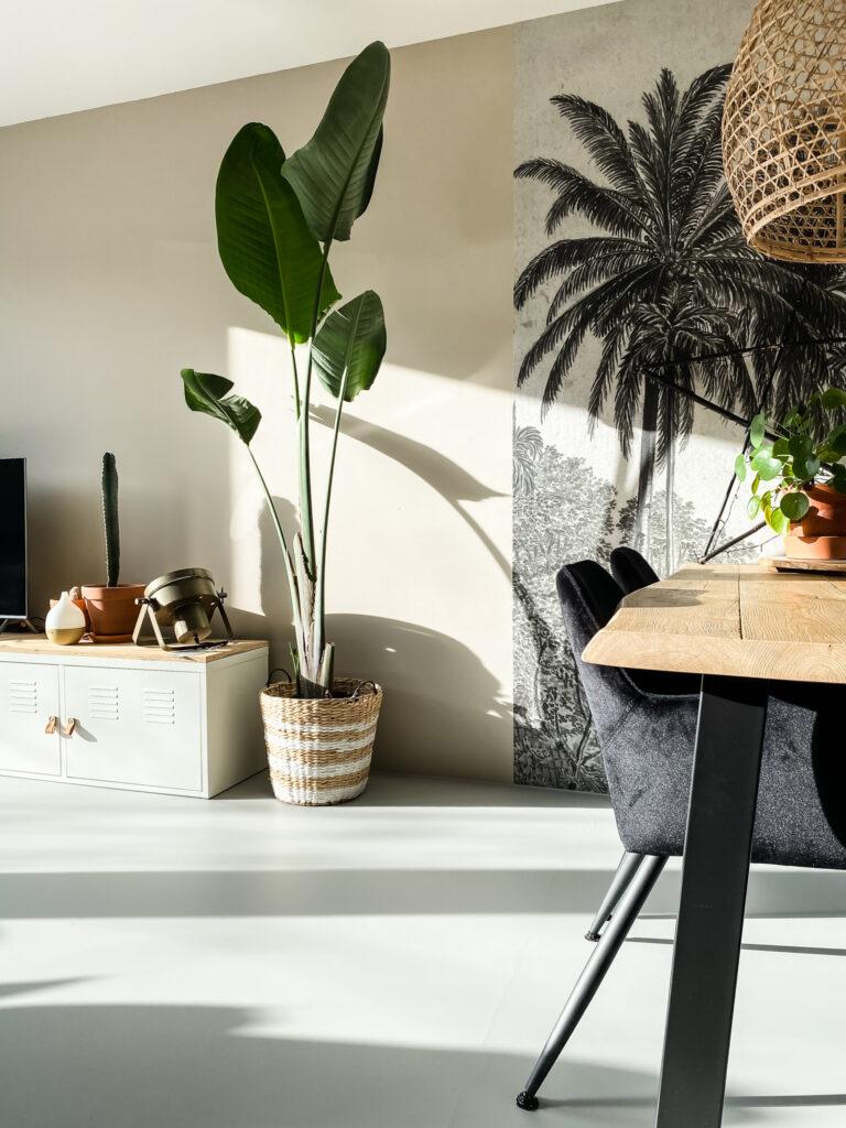 goedkope planten strelitzia via facebook marketplace
